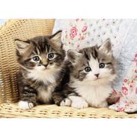 Comparateur de prix Puzzle 100 pièces Duo de chatons - Ravensburger