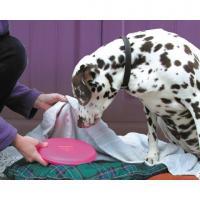 Comparateur de prix Snuggle Safe - Bouillotte pour chien et chat