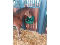 Comparateur de prix Auge de poulain vert 9 l 32465